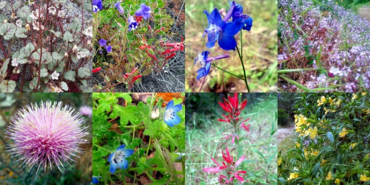Composite wildflower image. Photos by Marcus C. England on 5/23/15.