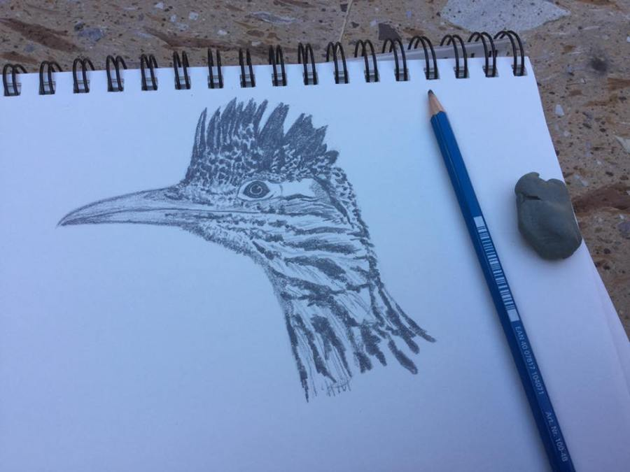 A sketch of a Roadrunner I completed over an hour or so in one lazy afternoon in Mexico.