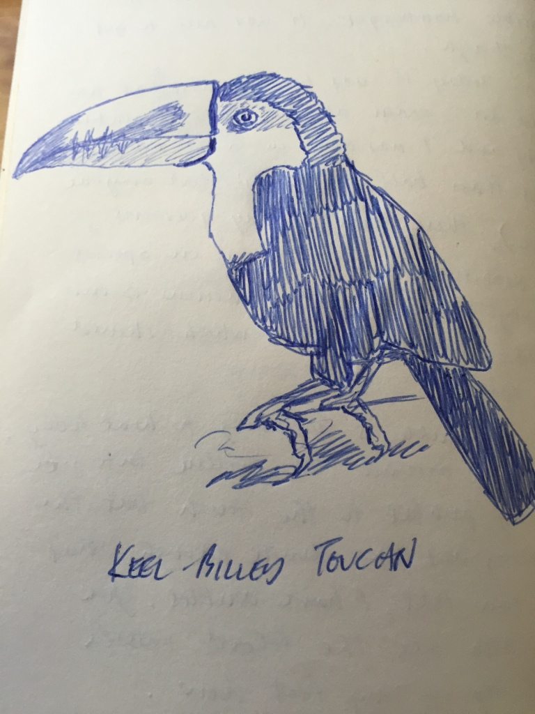Keel-billed Toucan. Sketch from my journal.